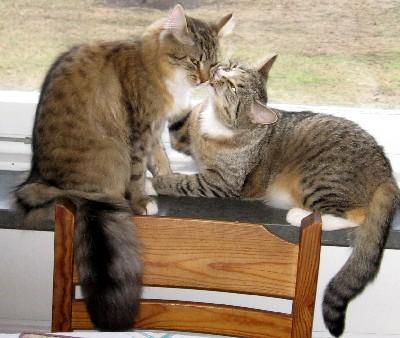 katt söker nytt hem göteborg